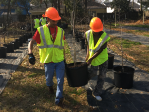 Two volunteers plant trees in Savannah, Georgia.