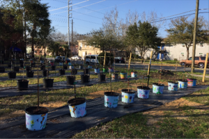 Rows of new trees are ready to be planted.