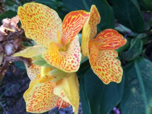 Photo of a yellow orchid with red speckles from the SSDN annual meeting in Sarasota, Florida.