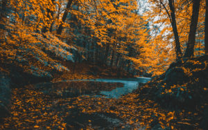 A photo of a winding river among autumn leaves for SSDN members North Carolina