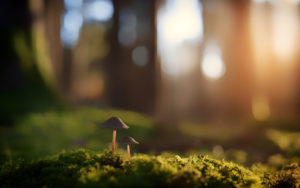 A closeup photo of new mushrooms on moss in a forest for SSDN members Arkansas