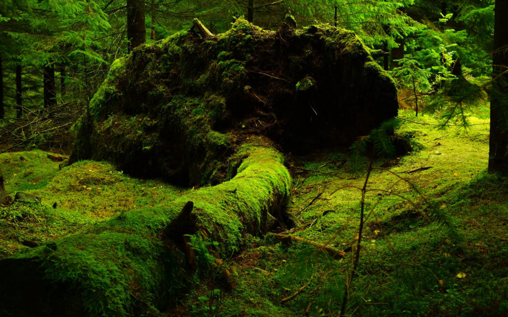 A photo of an old fallen tree covered in moss in an old growth forest for Southeast Sustainability Directors Network (SSDN) newsletter