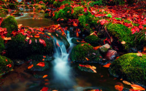 A photo of red autumn leaves on a stream for SSDN our funders
