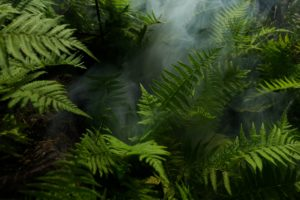 Ferns Photo by Elias Tigiser from Pexels