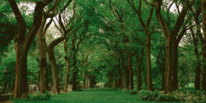 A photo of old trees in a green landscape for SSDN annual meeting in Savannah, Georgia